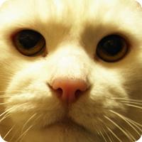 eighteen_cat.jpg